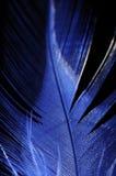 голубое перо крупного плана Стоковые Фото