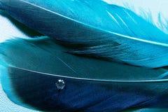голубое перо немного больше Стоковые Изображения