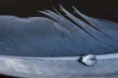 голубое перо с падением Стоковые Фото