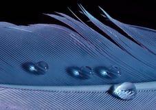 Голубое перо с падениями Стоковые Фотографии RF