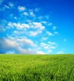 голубое поле над пшеницей неба Стоковая Фотография RF