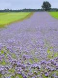 голубое поле Стоковые Изображения RF
