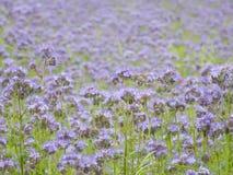 голубое поле Стоковое Изображение RF