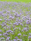 голубое поле Стоковые Фотографии RF