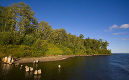 голубое река рта зеленого цвета пущи стоковое изображение rf