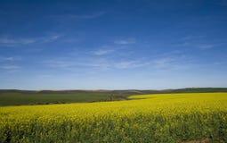 голубое canola fields небо стоковые изображения rf