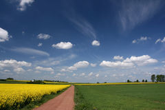 голубое canola fields небо Стоковое Изображение