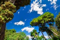 голубое forrest зеленое небо Стоковая Фотография RF