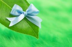 голубое ribon листьев Стоковые Фотографии RF