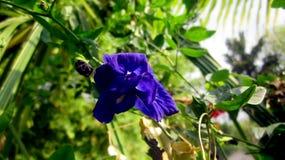 Голубой близкий снимок цветка в красивом ли Стоковые Фото