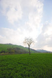 голубой вал неба зеленого цвета травы Стоковое фото RF