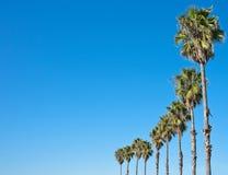 голубой вал неба ладони рамки Стоковые Изображения RF
