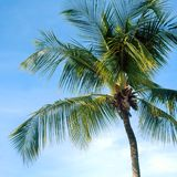 голубой вал неба ладони Стоковое фото RF