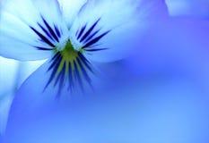 голубой вид Стоковые Фотографии RF
