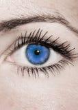 Голубой глаз - красивейший, женственно стоковые фото