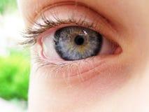 голубой глаз Стоковое Изображение