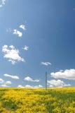 голубой желтый цвет весны неба поля Стоковая Фотография