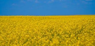 голубой желтый цвет неба поля Стоковое Изображение RF