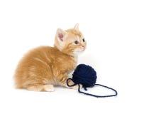 голубой желтый цвет пряжи котенка Стоковые Изображения RF
