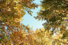 голубой желтый цвет Стоковая Фотография
