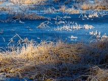 Голубой замороженный пруд утки стоковое фото rf