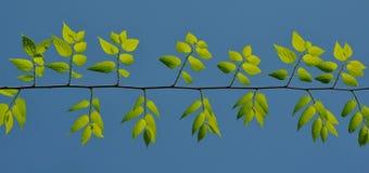 голубой зеленый цвет листает небо вниз Стоковые Изображения RF