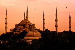 голубой индюк мечети istanbul Стоковое Фото