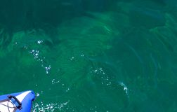 Голубой каяк на зеленой воде Стоковые Изображения RF