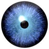 Голубой, который замерли 3d глаз, животная текстура зрачка иллюстрация штока