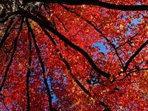 голубой красный цвет etude Стоковая Фотография RF