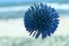 Голубой круглый цветок Голубой цветок над предпосылкой запачканной синью Стоковое фото RF