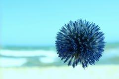 Голубой круглый цветок Голубой цветок над предпосылкой запачканной синью Стоковая Фотография RF