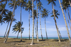 Голубой пляж с кокосом Стоковая Фотография