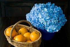 голубой помеец Стоковая Фотография