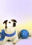 голубой праздник собаки Стоковая Фотография