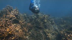 Голубой разветвляя коралловый риф и другие refs коралла акции видеоматериалы