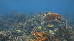 Голубой разветвляя коралловый риф и другие refs коралла сток-видео