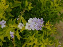 Голубой сад цветет на красивый день освещенный по солнцу стоковое изображение rf