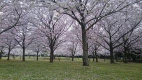 Голубой сад Стоковое фото RF