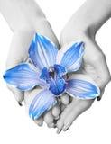 голубой серый цвет стоковые фотографии rf