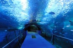 голубой тоннель Стоковое Изображение