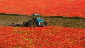Голубой трактор в поле красных маков стоковое изображение rf