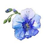 Голубой цветок льна Флористический ботанический цветок Изолированный элемент иллюстрации Стоковое Фото