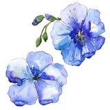 Голубой цветок льна Флористический ботанический цветок Изолированный элемент иллюстрации Стоковая Фотография