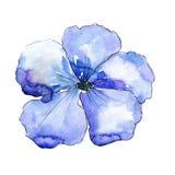 Голубой цветок льна Флористический ботанический цветок Изолированный элемент иллюстрации Стоковые Фотографии RF