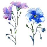 Голубой цветок льна Флористический ботанический цветок Изолированный элемент иллюстрации Стоковое Изображение