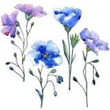 Голубой цветок льна Флористический ботанический цветок Изолированный элемент иллюстрации Стоковое Изображение RF