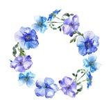 Голубой цветок льна Флористический ботанический цветок Квадрат орнамента границы рамки Стоковое фото RF