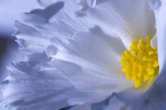 голубой цветок Стоковая Фотография