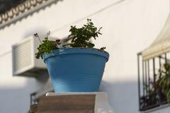 Голубой цветочный горшок Стоковые Фотографии RF